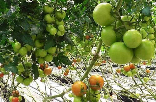 Lär dig mer om näringsämnen och gödsling del 1