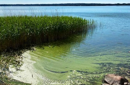 Undersök hur näringsämnen påverkar havet